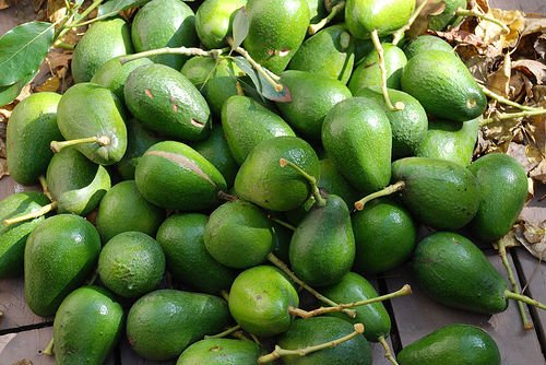 Hass and Fuerte Fresh Avocados Cheap Price