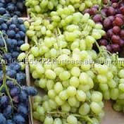 Grade A Fresh Red, White, Black, Seedless grapes