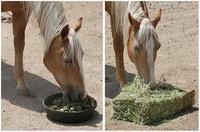 Alfalfa Hay, Timothy ,Oat hay ,Wheat Hay