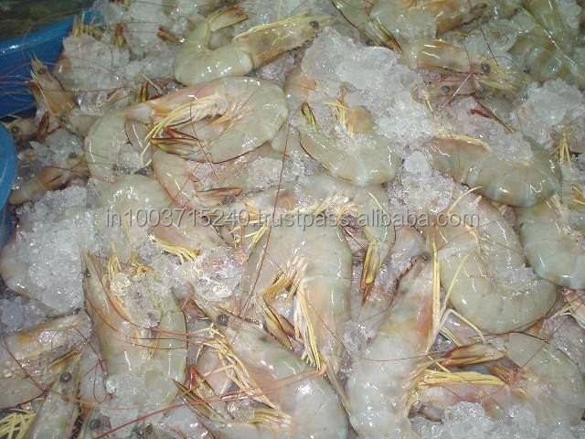 fresh Chilled sea white shrimps and Grouper, snapper