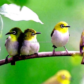 Unduh 440+  Gambar Burung Yang Halal HD Paling Unik Gratis