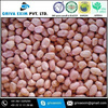 50/60 Bold Peanut with Pink Color at Affordable & Reasonable Price