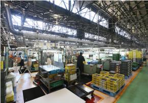 Extractor de tamaño y alta tecnologia cosechadora de arroz molino universal co<em></em>njunto de suministros de automoción extractor orden de la porción dispo<em></em>nible Venta al por mayor, al por mayor, Fabricación, fabricantes, proveedores, exportadores, im<em></em>portadores, productos, oportunidades de mercado, proveedor, fabricante, im<em></em>portador, Suministro