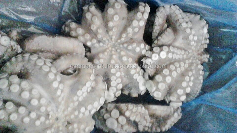 Hot Selling High Quality frozen iqf octopus flower from Morocco
