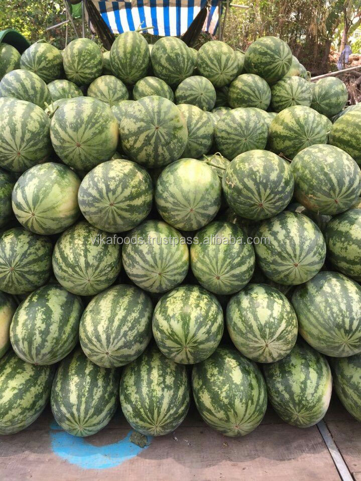 FRESH WATERMELON- EXPORTING STANDARD- BEST PRICE