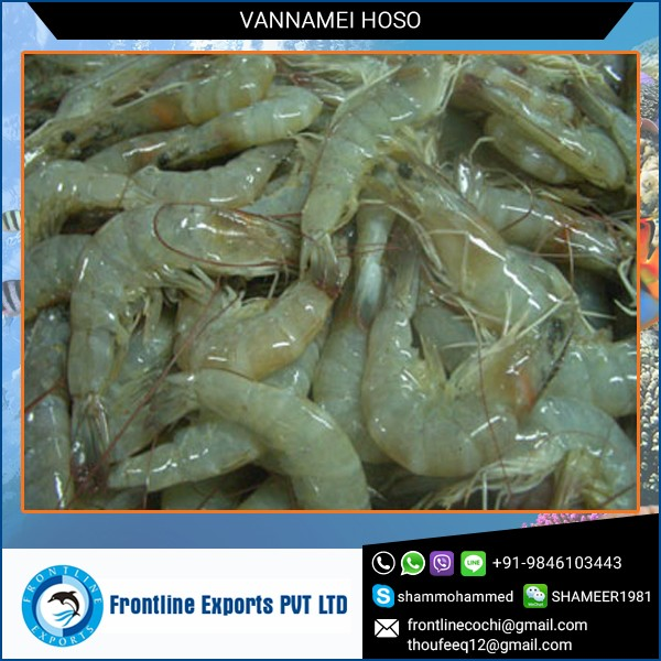100% Fresh Frozen Vannamei Hoso at Affordable Price