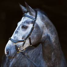 Deluxe Competition Micklem Bridle