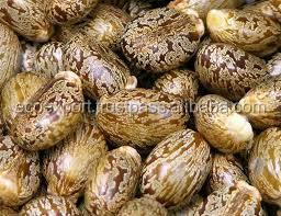 Quality Castor Seeds
