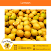 Tangy Fresh Indian Farm Lemon at Attractive Price