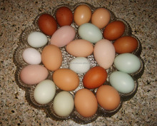 QUALITY Chicken Eggs AT CHEAP PRICE/ FRESH BROWN EGGS/ duck eggs