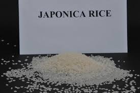ROUND RICE / JAPONICA RICE/ SUSHI RICE OIL POLISHED