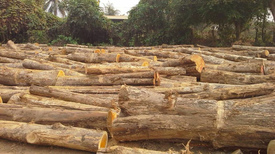 Hardwood Type And Square Shape Pine And Oak Teak Wood Logs