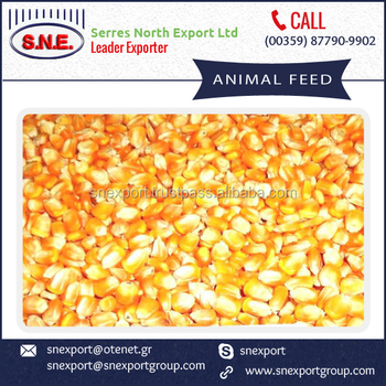 Protein Rich Corn Animal Feed For Bulk - Buy Animal Feed,Yellow Corn Animal  Feed,Animal Feed Corn Suppliers Product on Alibaba com