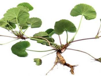 Vitro Naturals Aloe Skin Gel 100ml