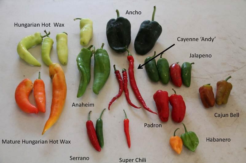 chili pepper chart