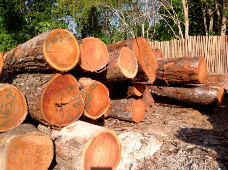 Tali Logs/Tali Round Logs, Tali Logs Suppliers/Tali Wood Logs