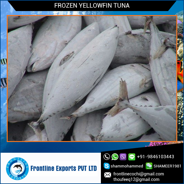 Top Quality Frozen Yellow Fin Tuna Loins for Sale