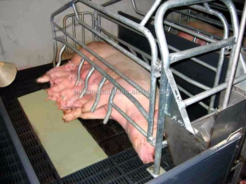 Stainless Steel Farrowing Crates, Stainless Steel Farrowing Crates ...