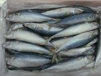 Cheap price FROZEN SALMON, ATLANTIC (Salmo salar) SEA FOOD FISH for sale