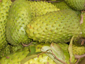 Siamese custard apple