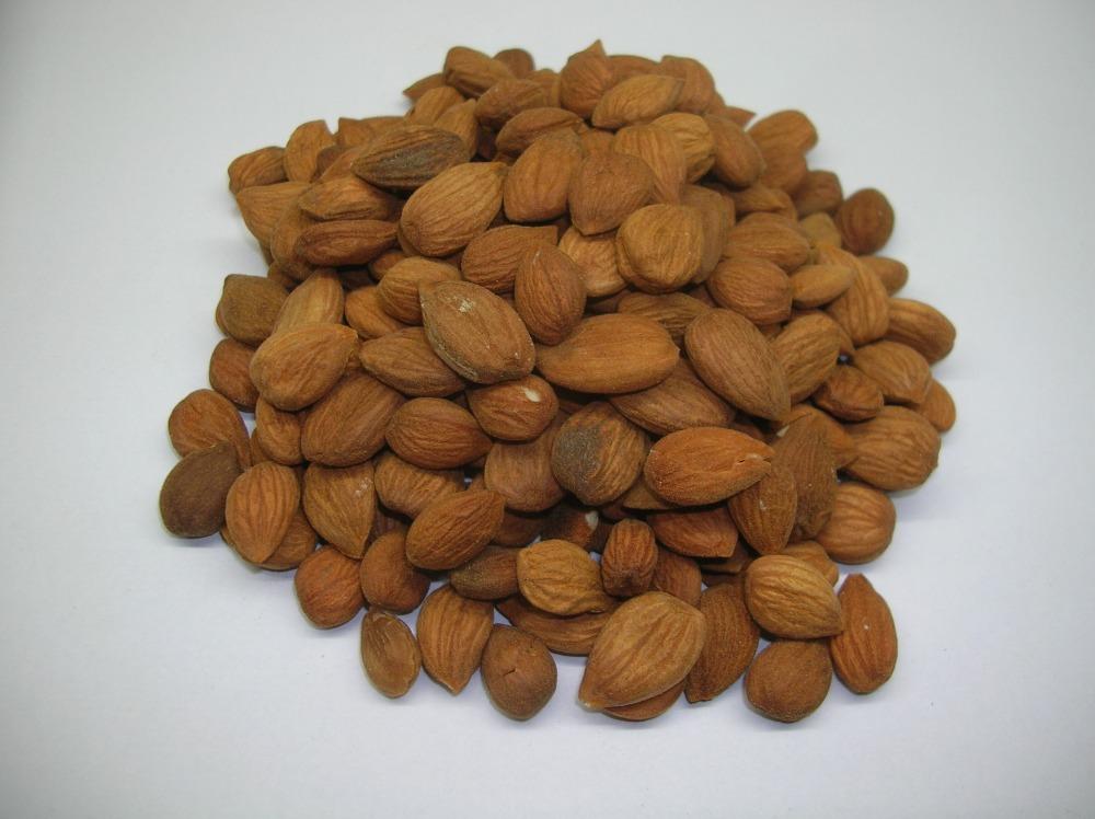 Buy apricot kernels