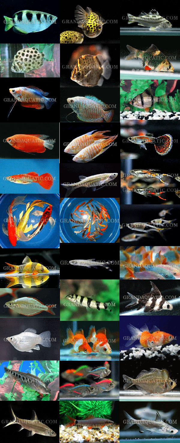 Aquarium Fish Farm And Export From Thailand