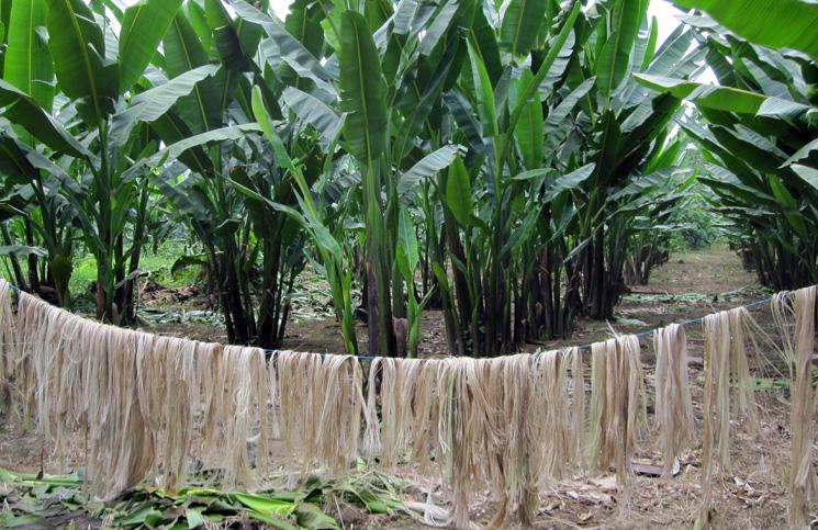 Real Banana Natural Fiber Yarn