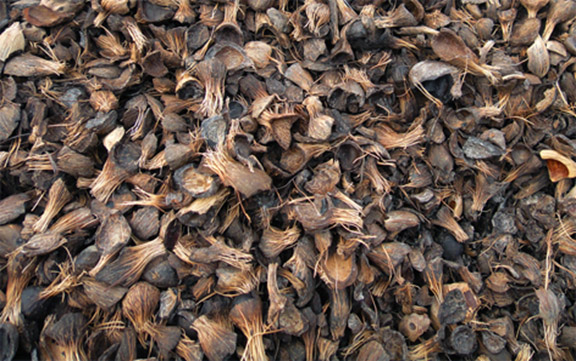 Quality Palm Kernel Shell