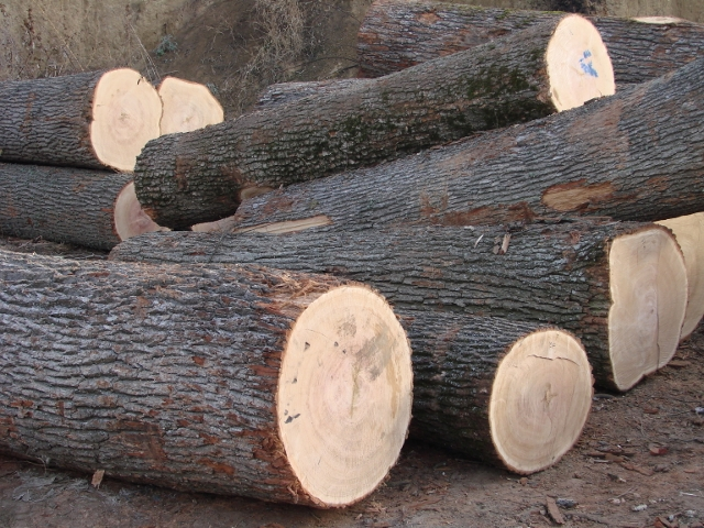 BUY WHITE OAK LOGS/FRESH CUT ROUND LOGS