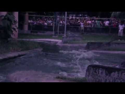 Tightrope-walker Falls into Crocodile Pen!