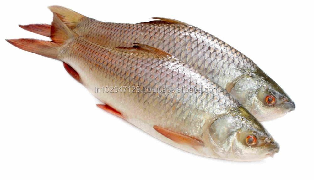 Biogut Aqua - Ensures Healthy Balanced Gut Micro Flora Of Fishes ...