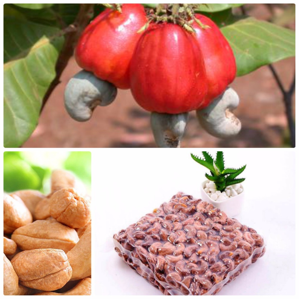 Vietnamese wholesale for cheap price cashew nuts/cashew kernel