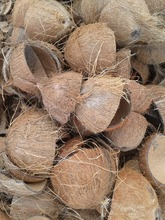 whole coconut shell