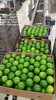 providing high quality seedless lemon, sold at competitive prices