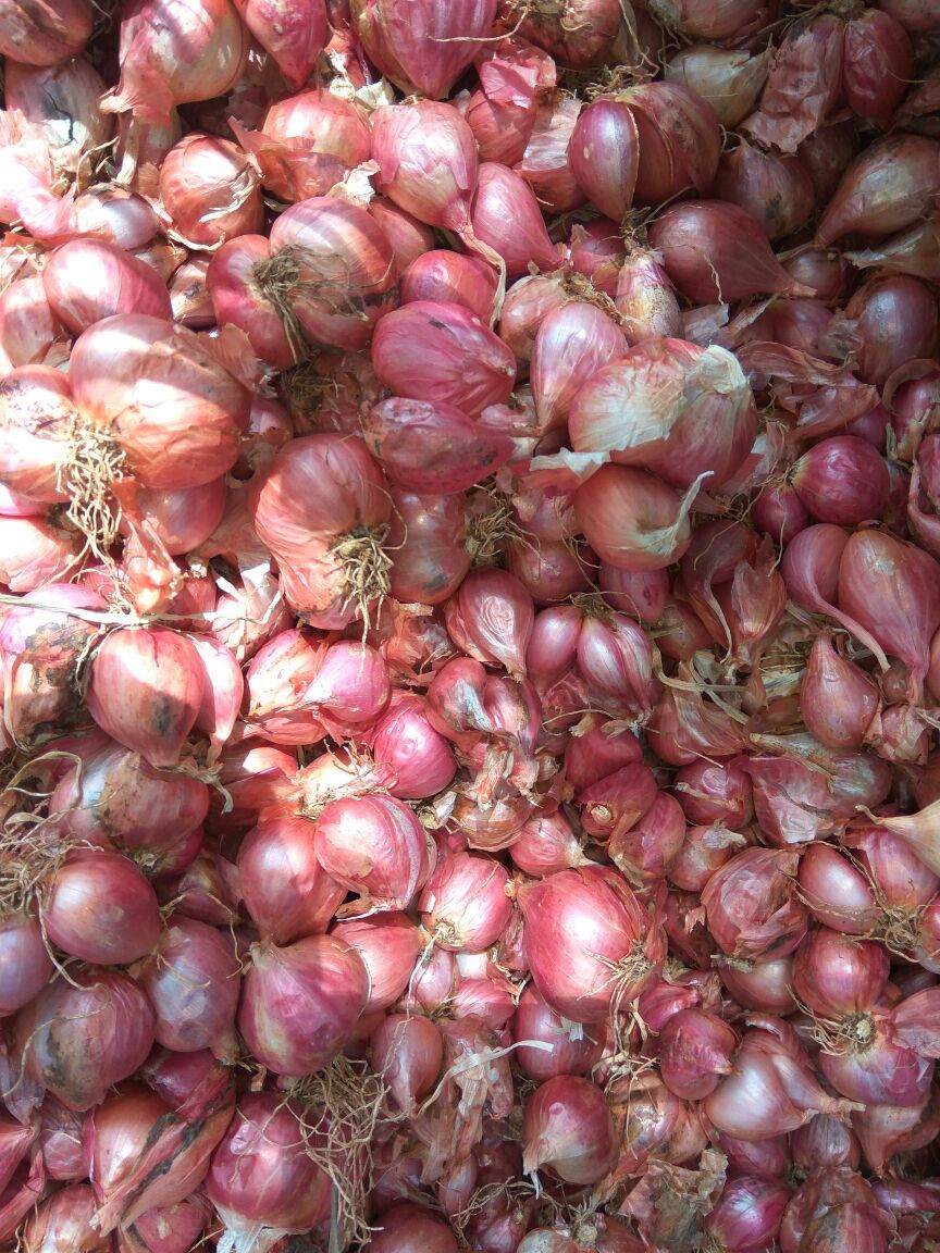 The Best Quality Of Sambar Venkayam Exporter / Supplier /Small Onions for UK /India/Canada/ Singapore / Maldives / UAE / Qatar
