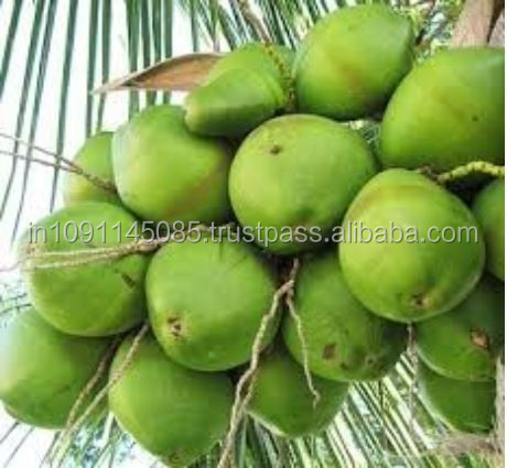 KERALA FRESH TENDER COCONUT