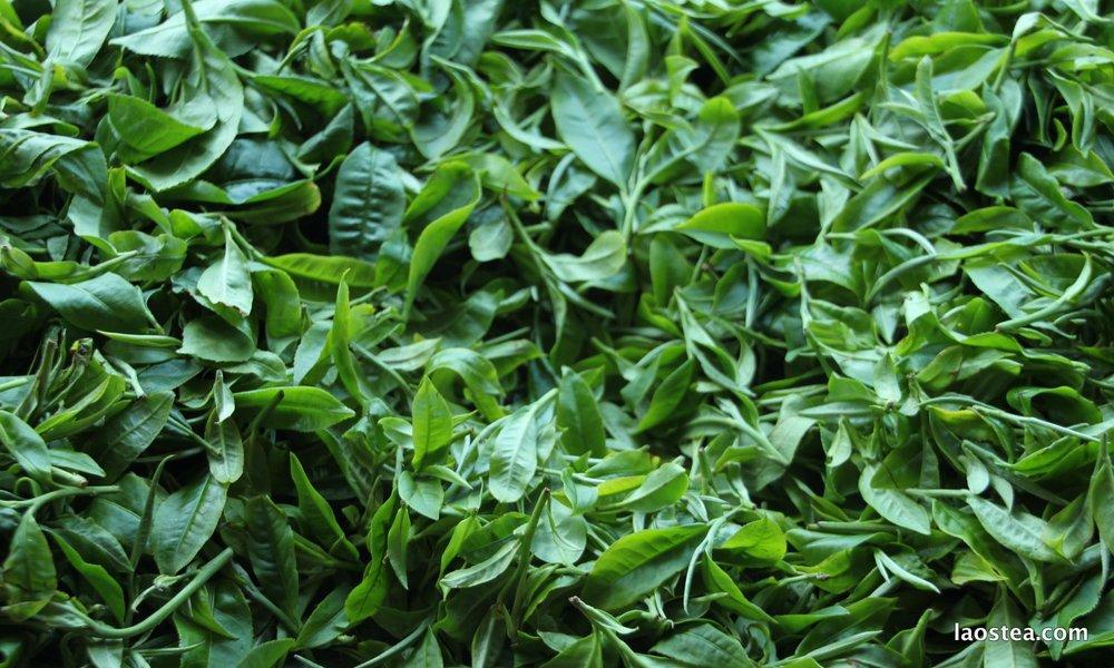 Laos black tea