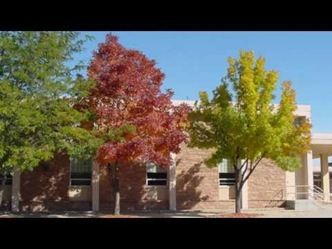 **Green Ash Tree**++Fastest Growing Shade Tree-List-OK in MA, MN & WY++