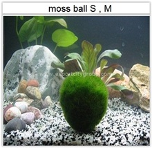 MOSS: <span class=keywords><strong>Live</strong></span> waterplanten-<span class=keywords><strong>mos</strong></span> bal glad