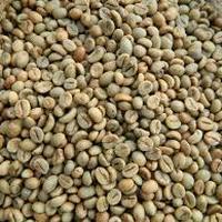 Robusta Lampung Grade 4 Coffee Bean
