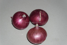 Onion Supplying from India/From Pune/Nashik/Onion good quality