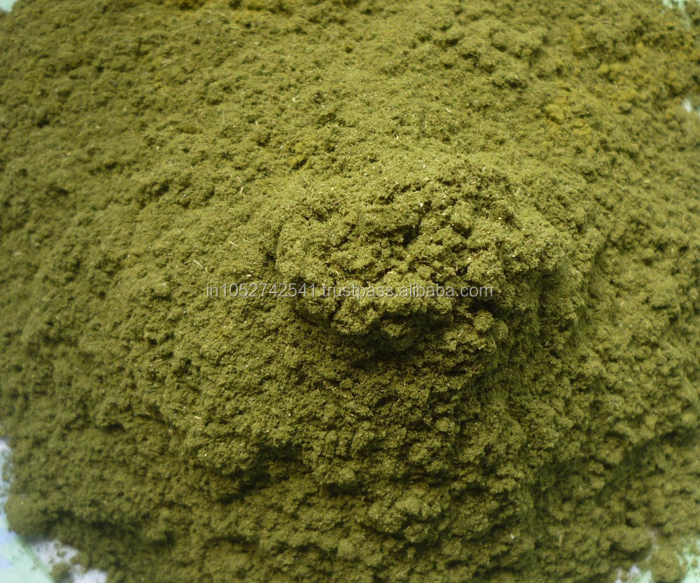 Good Quality Graviola Leaf Powder Manufacturer