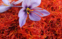 Saffron From LA Mancha (Spanish)