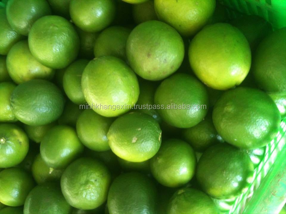 Fresh Green Lime From Vietnam -seedless