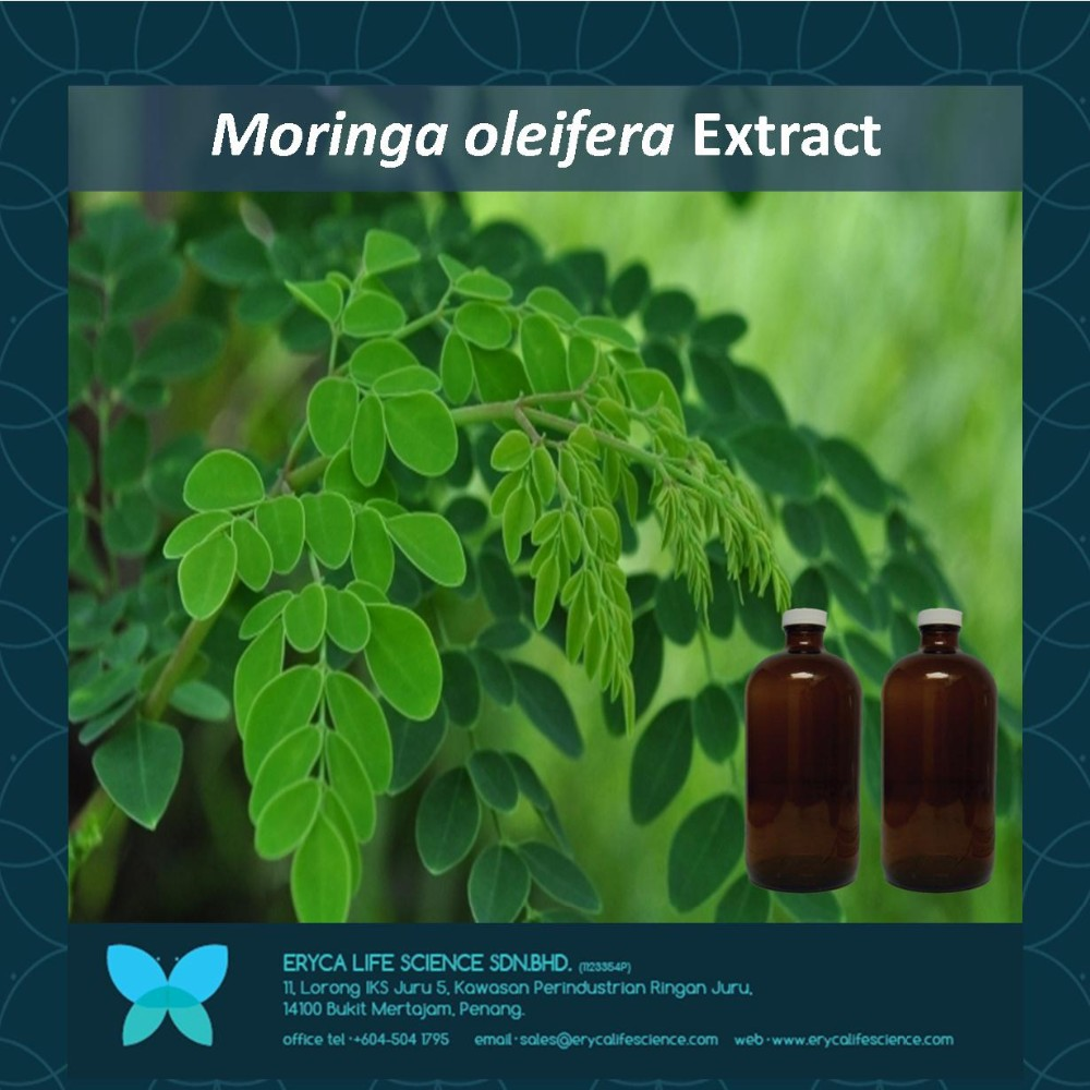 phytochemical studies of moringa oleifera The present study was under taken to investigate biologically active compounds in moringa oleifera pods with emphasis on those with antidrabetic potential the extraction of moringa oleifera pods was carried out via maceration using 70% methanol.