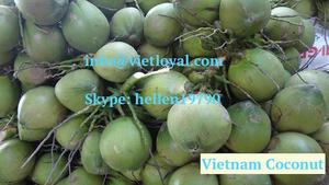 Fresh Coconuts For UAE, Saudi, Kuwait and Singapore /cheap price whole  fruit coconuts