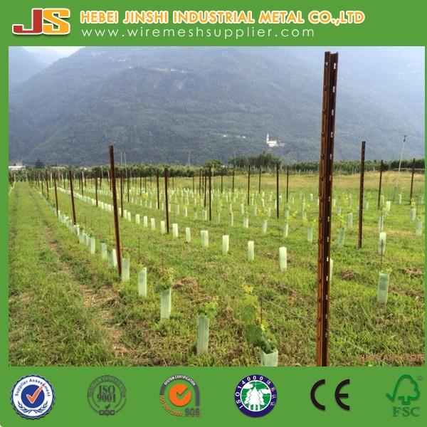 Pali Per Vigneti.Pali Per Vigneto Vineyard Metal Poles For Italia Buy Light Poles For Sale Metal Pole For Fencing Heavy Duty Post Shore Product On Alibaba Com