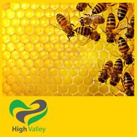 100% Wild Flower Honey Bee for exporting