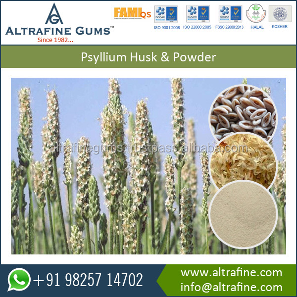 Natural Psyllium Powder Curing agent for peptic ulcers
