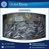 2016 Fresh Arrival of Long Shelf Life Whole Round Frozen Sardine